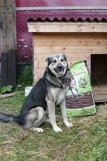 Собака в добрые руки, в Екатеринбурге