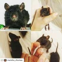 Крысята, в Мытищи