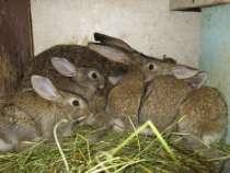 кролики мясной породы, в Омске