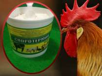 Пробиотическая добавка для роста птиц, в Уфе