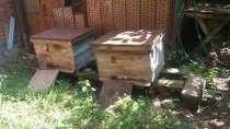 Продам улики с пчёлами, в Краснодаре