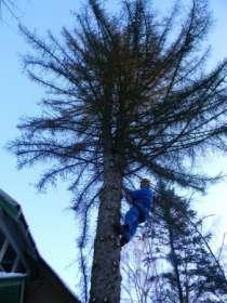 Спилить удалить дерево в Раменском,Бронницах,Жуковском,Кратово,Быково,Малаховка,Ильинском., в Раменское