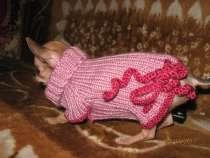 Вязанная одежда для собак, в Москве