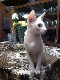 Предлагаю кота для вязки, в Москве