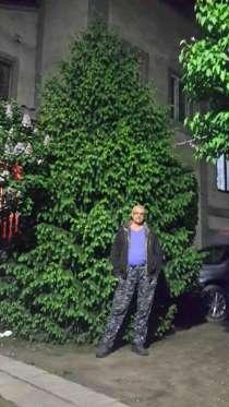 Продам елки, в г.Алматы