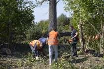 Услуги по вырубке деревьев корчевании пней любых масштабов, в г.Губкин