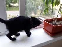 Котенка в добрые руки, в г.Котельники