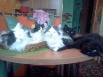 Котята бесплатно, в г.Лида