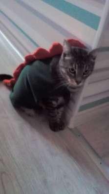 Кот серый полосатый кастрированый