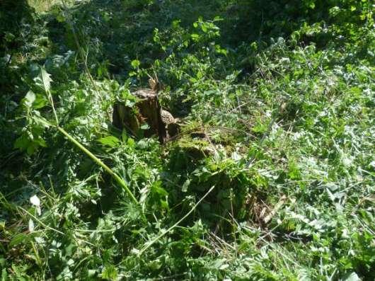 Расчистка участка от кустарника, вырубка (спил) деревьев. Снос дома. в Клине Фото 3