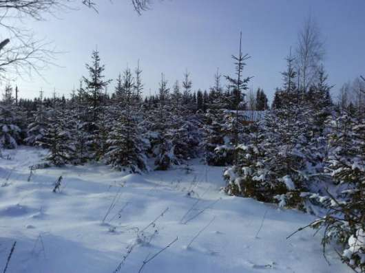 Участок 15 соток в дер. Юрково 103 км от МКАД в г. Боровск Фото 4