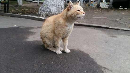 Отдается кот Рыжик