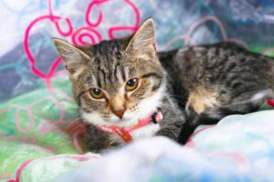 Любознательный котенок Стефан ищет дом. в Москве Фото 4