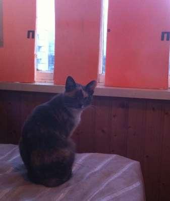 Кошечка с одним глазиком очень нуждается в доме