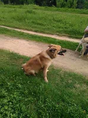 Отдам в хорошие руки собаку