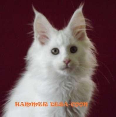 Котята мейн-кун в Новочеркасске Фото 2
