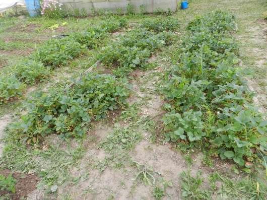 Продам огород СНТ Маяк в Ижевске Фото 5