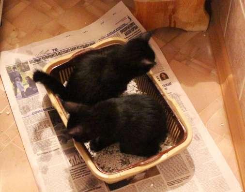Продам котёнка в Москве Фото 4