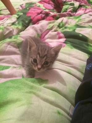 Котята даром в Казани Фото 3