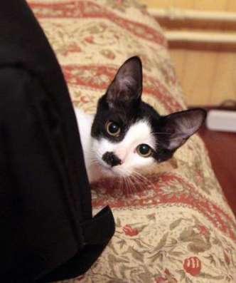 Веселый пиратик - котенок Зось ищет дом. в Москве Фото 3