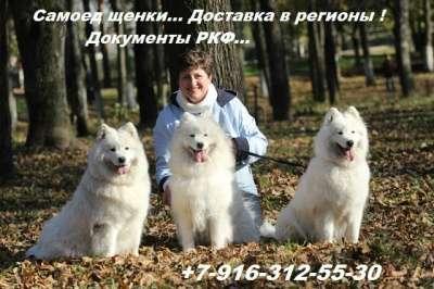 Самоед щенки в г. Новый Уренгой Фото 2