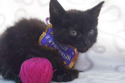 Отдам даром котенок Ёлка