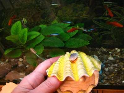 СРОЧНО !!! 2 аквариума действующих в Москве Фото 1