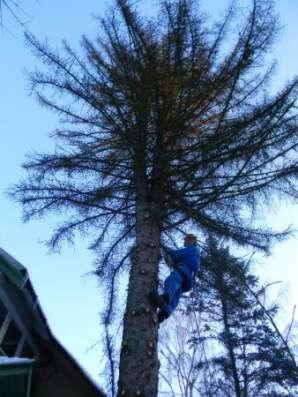 Спилить удалить дерево в Раменском,Бронницах,Жуковском,Кратово,Быково,Малаховка,Ильинском.