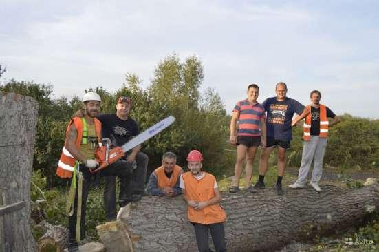 Спил, удаление и вырубка опасных деревьев