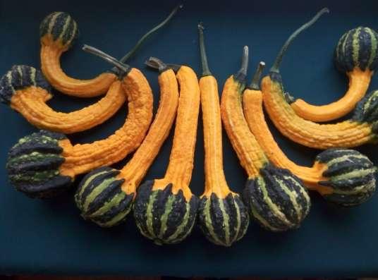 Декоративная тыква, плоды