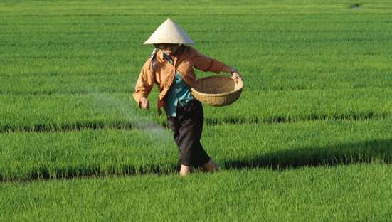 Поставка риса из Вьетнама и Таиланда, более 10 видов в Москве Фото 2