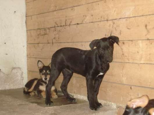 Подрощенные щенки в дар
