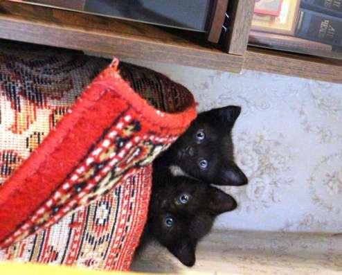 Продам котёнка в Москве Фото 3