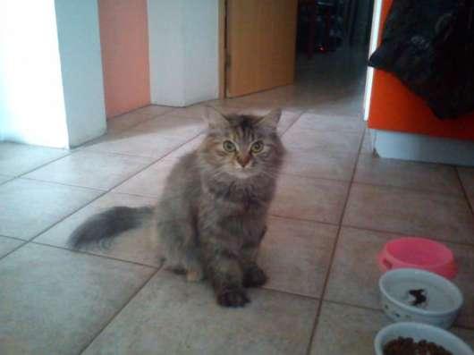 Кошка полосатик в Красноярске Фото 1
