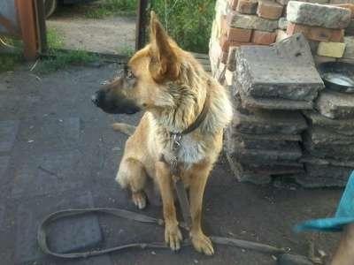 Отдам даром Дарим щенят. в Набережных Челнах Фото 1