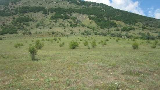 зем. участок 60 сот Лучистое Алушта АР Крым Фото 2