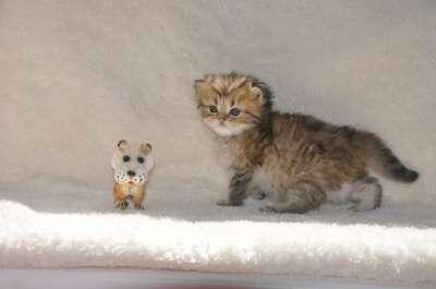 Удивительные котята в г. Белореченск Фото 1